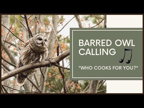 Barred Owl Calls To Mate - Amazing Vocals