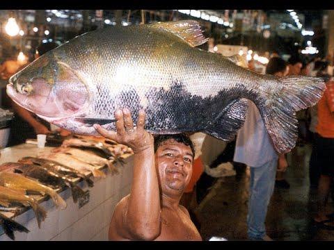 Rare Fish Eats Man Testicles
