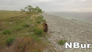Байкальский медведь