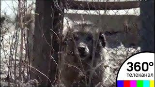 В Челябинской области злобная собака держит в страхе целый поселок