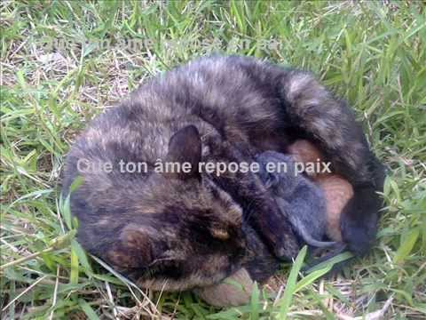 mon chat qui est mort youtube. Black Bedroom Furniture Sets. Home Design Ideas