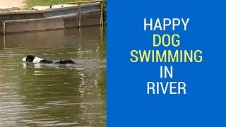 Happy Dog Swimming in River and Playing