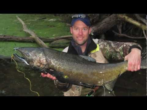 Download Youtube: 18 Mile Creek NY, Salmon Fishing with Holsingers Fly Shop