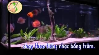 Karaoke Phung Hoang avi