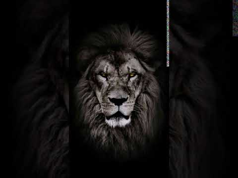 The Lion Youtube