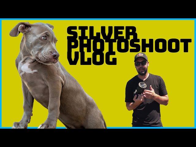 Silver Vlog