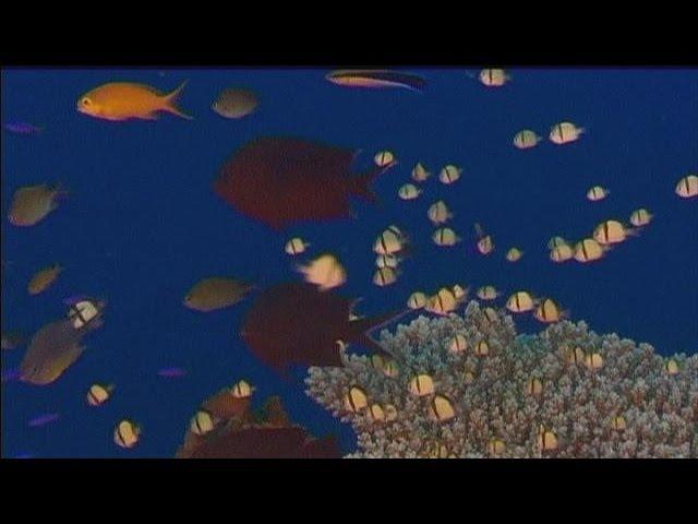 Принтер 3D - для кораллового рифа - hi-tech