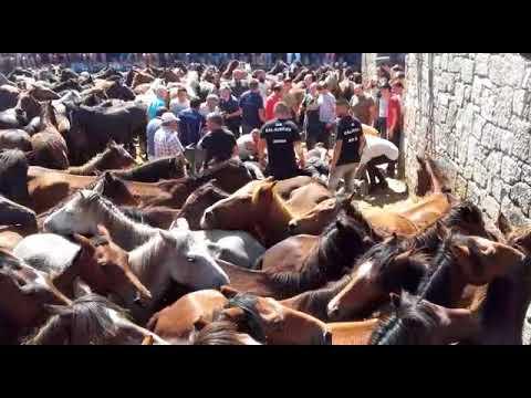 A loita ancestral entre home e cabalo continúa en Sabucedo