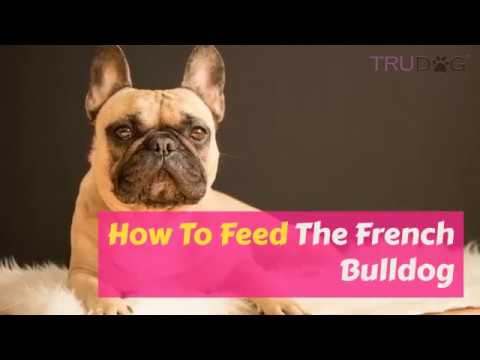 How To Feed The French Bulldog