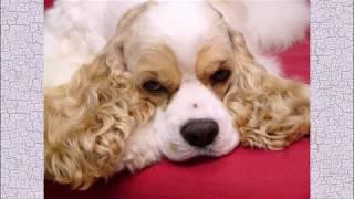 Охотничьи собаки Самые прикольные породы собак #Видео_с_животными
