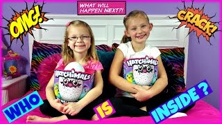 Baixar HATCHIMALS  WHO WILL I HATCH - Magic Box Toys Collector