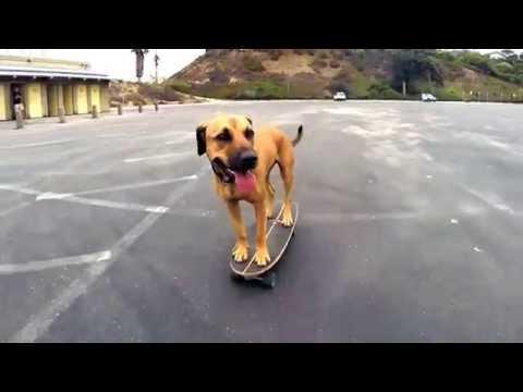 Bamboo es el perro de la calle que nació skater