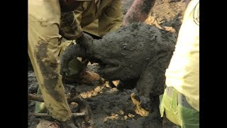 Park Rangers Save Baby Elephant Stuck in Mud & Reunites with Mom!