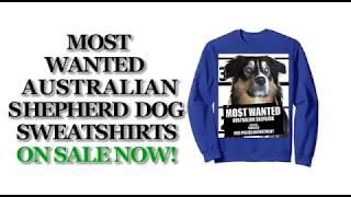 Most Wanted Australian Shepherd Funny Dog Sweatshirts - Men's, Women's, Kid's - Black, Grey, Blue