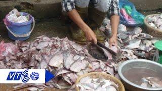 Hải sản bẩn đang hạ độc người Việt như thế nào? | VTC