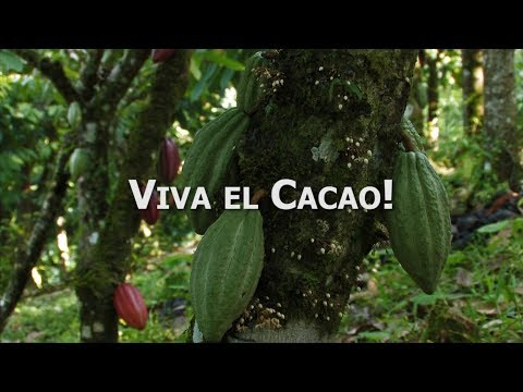 "Zotter: Cocoa movie Nicaragua - ""Viva el Cacao"" (31 Min. Slovenian   Slovenski)"