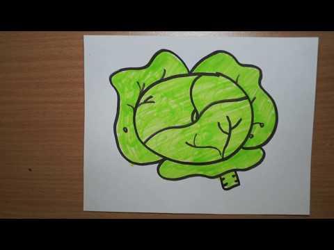 Как нарисовать капусту карандашом поэтапно для начинающих