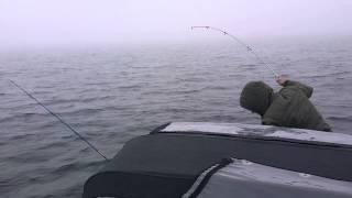 Белое море , рыбалка на Кузовах , треска, июль 2015(, 2015-08-13T09:11:59.000Z)
