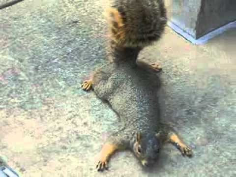 Squirrel Memes. Best Collection of Funny Squirrel Pictures