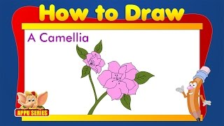 Learn to Draw Flower - Draw a Camellia