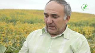 Відгук   Соя   Рівненська обл  2015