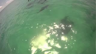 dolphin orgy NSFW