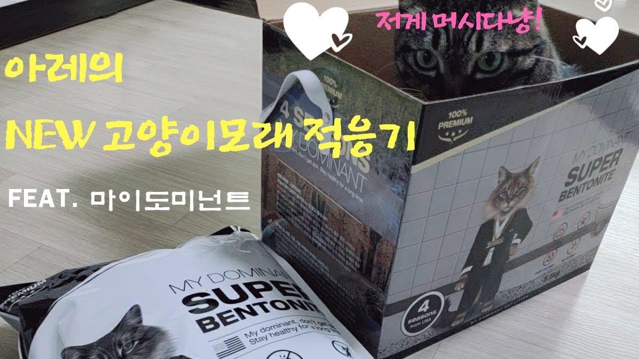[어쩌다성배우] 아레의 NEW 고양이모래 적응기 (feat.마이도미넌트)│성연호TV