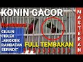 Konin Gacor Full Tembakan Kombinasi Isian Cililin Ciblek Jangkrik Rambatan Serindit  Mp3 - Mp4 Download
