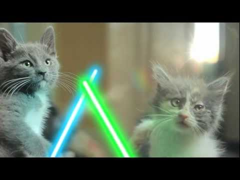 Thumbnail for Cat Video Jedi Kittens