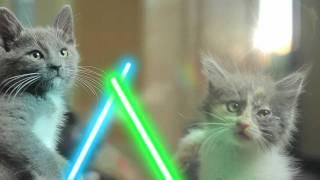 Jedi Kittens thumbnail