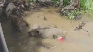 Животные Амазонки  Борьба за выживание