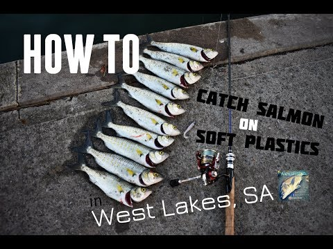 HOW TO: Catch Australian Salmon on Soft Plastics | West Lakes, SA