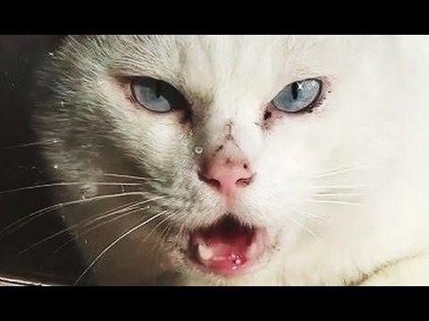 【実録 猫の喧嘩!】見たことのない猫の威嚇 Relax and funny cat for quarrel.