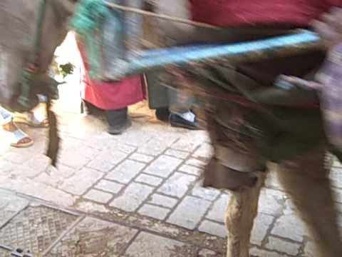 Ladin Terrys In Morocco 09