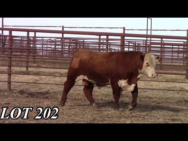 Mead Angus Farms Lot 202