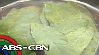 Salamat Dok: Health benefits of Guava Leaves | Cura Mula sa Nature