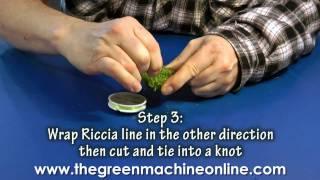 Preparing Riccia Fluitans for planting in an aquarium