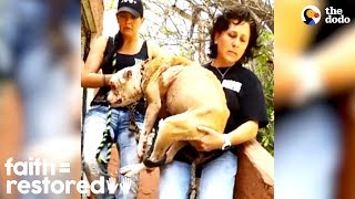 Dog Chained To Abandoned Building Gets Transformed By Love | The Dodo Faith = Restored