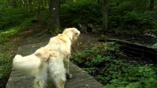 Awesome Funny Scared Golden Retriever