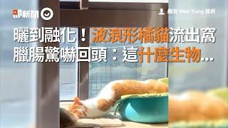 曬到融化!波浪形液態橘貓流出窩 臘腸狗驚嚇回頭:這什麼生物|寵物|鬧鐘貓