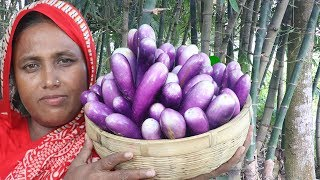 Farm Fresh Brinjal Recipe Homemade Yummy Cooking Alive Rui Fish With Eggplant Curry Village Food