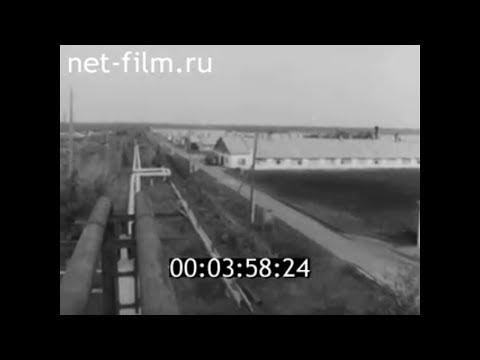 1980г. птицезавод Красный Кут Саратовская обл
