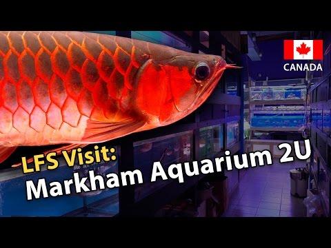 LFS Visit: Markham Aquarium 2U (Canada Special!)