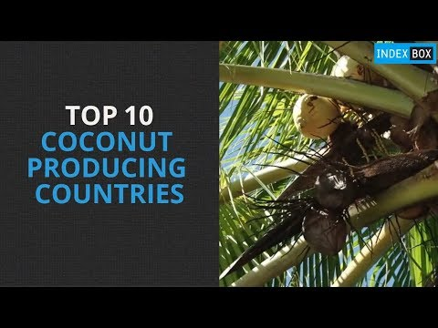 Top 10 Coconut Producing Countries