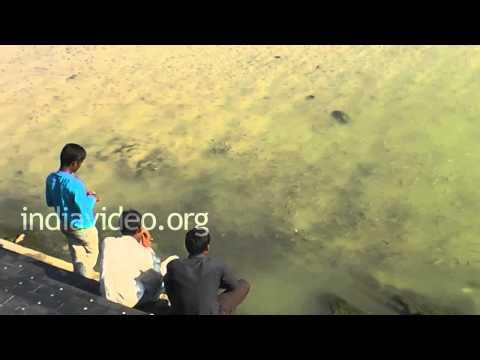Fish Feeding, Jamnagar