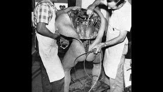 Experimentos prohibidos en la ciencia y en humanos