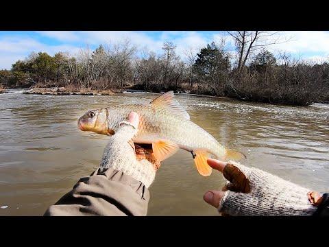 Winter Wade Fishing | Catching Sucker Fish?