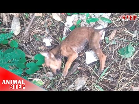 Rescue Dying Puppy from the Wood with Heartbroken