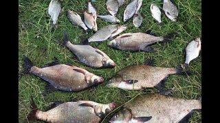 Рыбалка Десна 2016