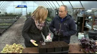 Gardening Tips:  How to Divide Plants & the Hottest New Perennials & Edibles for 2015